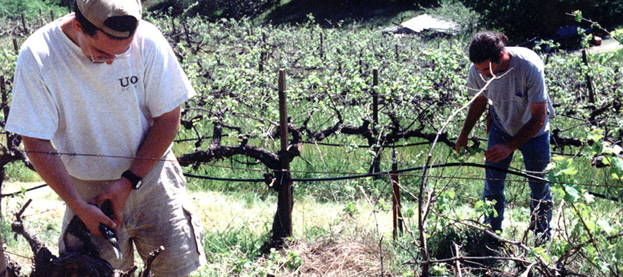 Vinum Cellars was founded in 1997 by first generation California family winemakers Richard Bruno and Chris Condos in the Napa Valley financing their dream ... & Vinum Cellars - Company - Background
